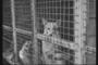 강아지 공장,'사지말고 입양하세요'